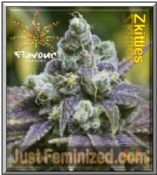 Buy the Finest Quality Flavour Chasers Zkittlez Cannabis Seeds